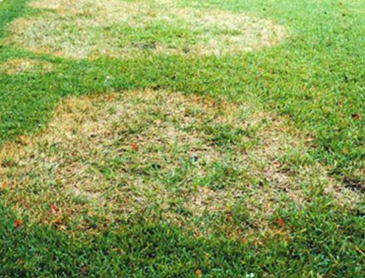 otow-grass