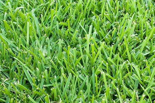 otow-lawns
