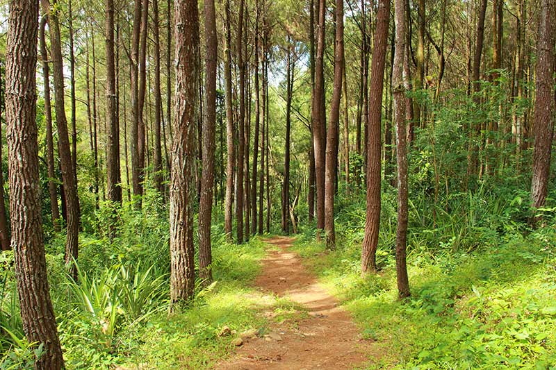 Long leaf pine Trail at On top of the World Communities Ocala, FL